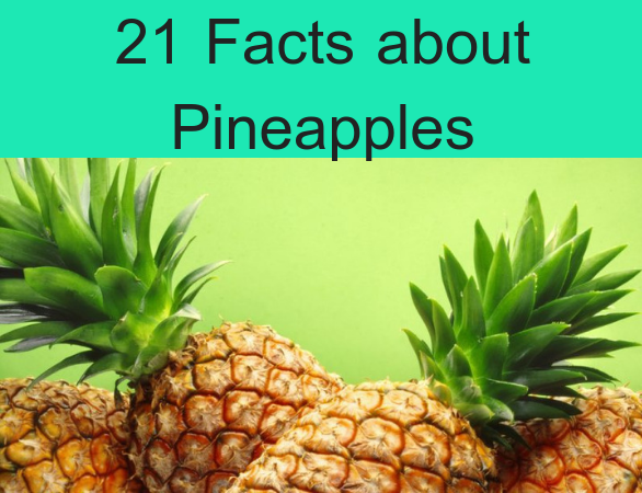 21 Facts about Pineapples